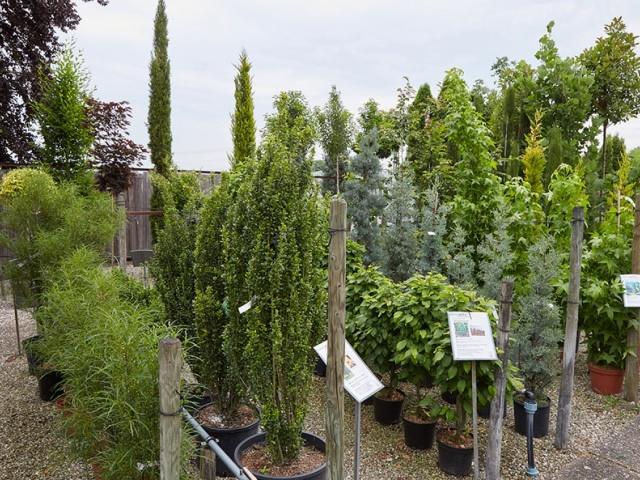 Säulenpflanzen